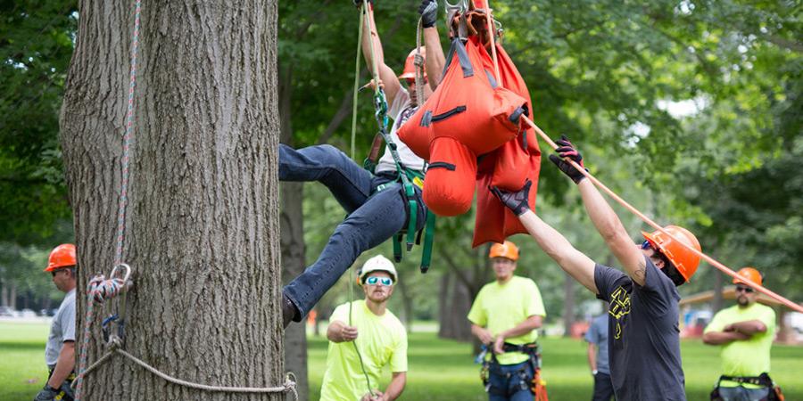 arborist training