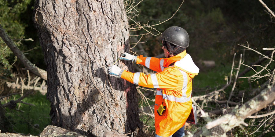 contract utility forester